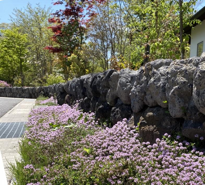 グリーンがいっぱい!軽井沢町の植栽 外構工事